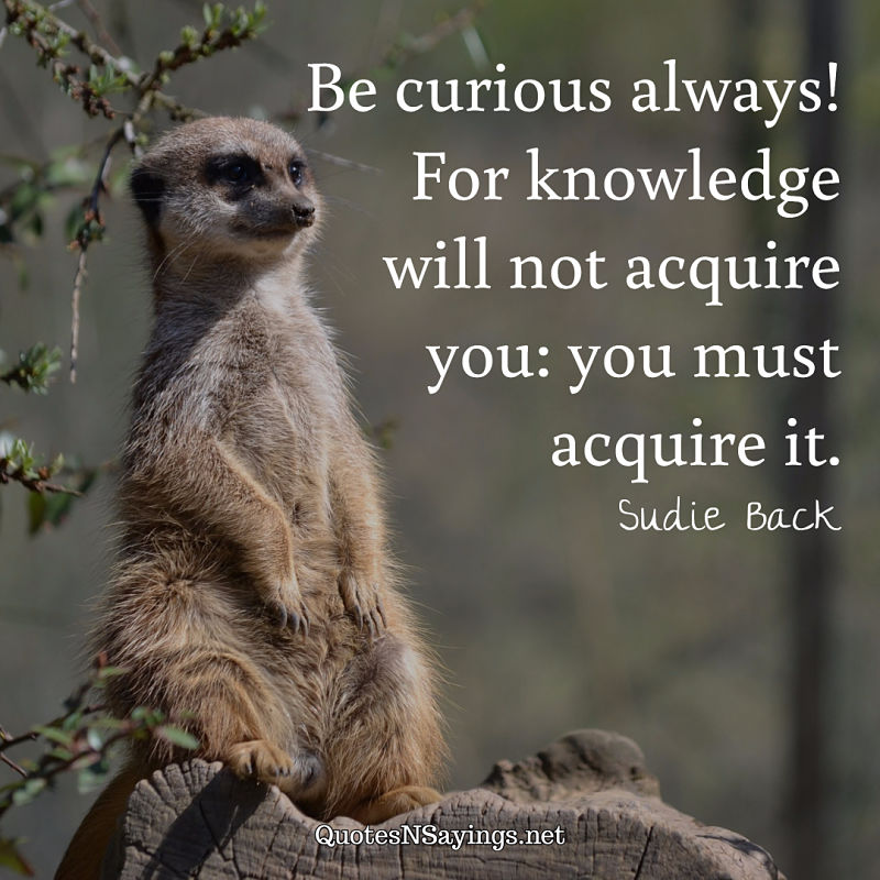 Be curious always! For knowledge will not acquire you: you must acquire it. - Sudie Back quote