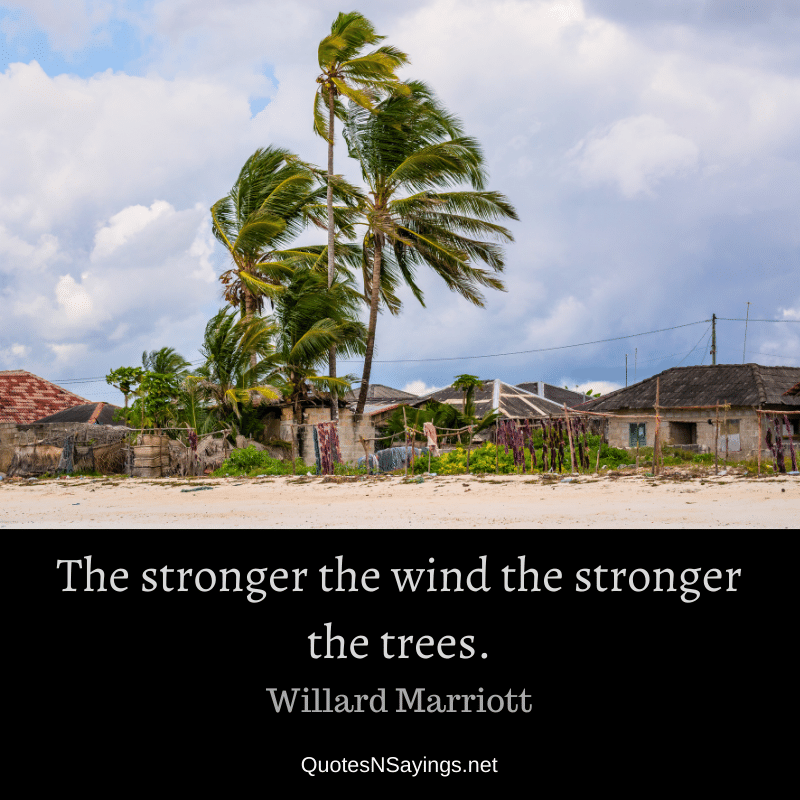 Willard Marriott quote - The stronger the wind the stronger the trees.
