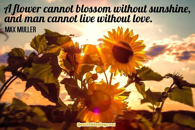 A Flower Cannot Blossom Quote