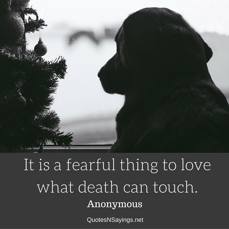 Loss of pet quotes - It is a fearful thing